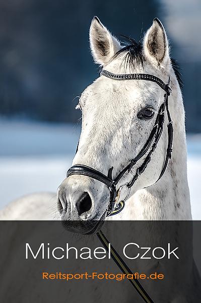 Pferdeshooting - Professionelle Fotos von Ihrem Pferd - Buchen Sie einen Profifotografen für Ihr Pferdeshooting
